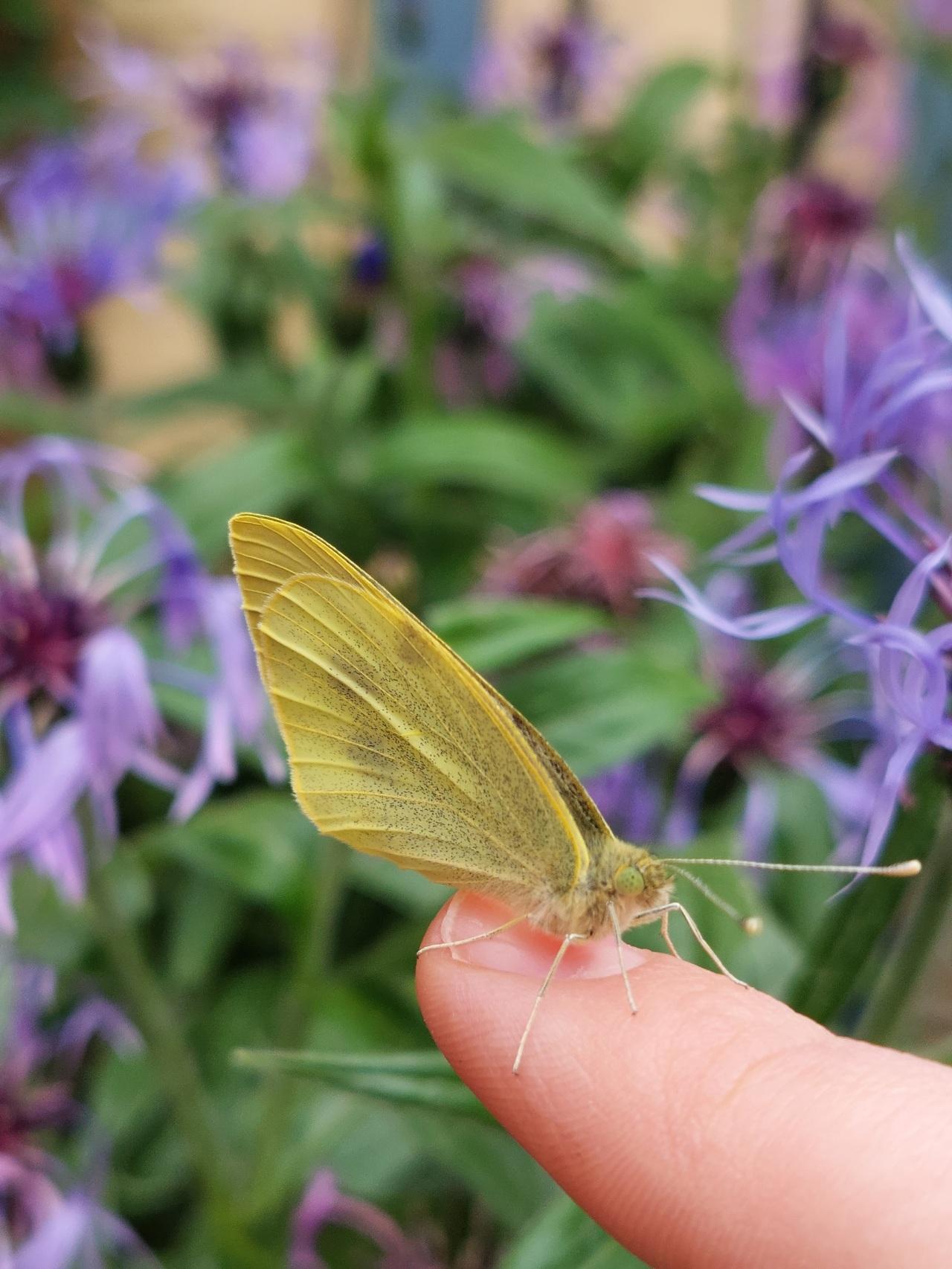Nature and Us: Bugs andBeetles