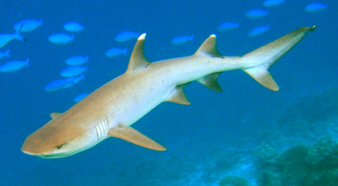 Nature and Us: Shark FinSoup